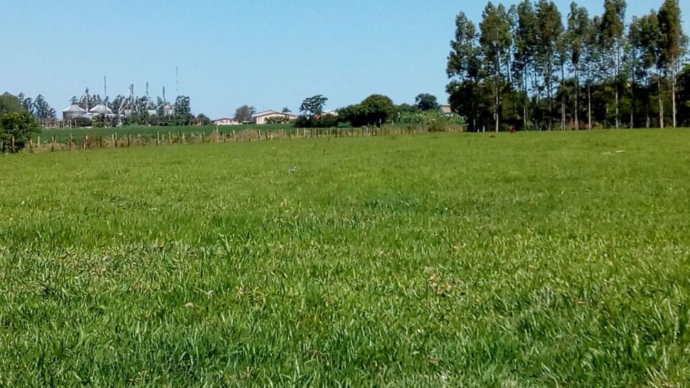 Vende-se Chácara de 1 hectare á 200 metros do asfalto